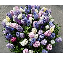 Assorted hyacinths Photographic Print