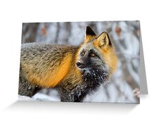 Cross Fox in the Arctic Greeting Card