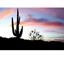 Sentinel Saguaro Photographic Print