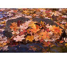 Autumn's Colors Photographic Print