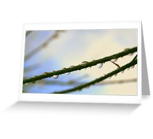 Symmetry in nature Greeting Card