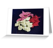 Red,White and Pink Poinsettias Greeting Card