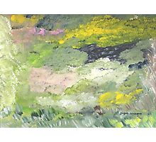 Plush Meadow Photographic Print