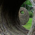 Oculi. by Jeanette Varcoe.