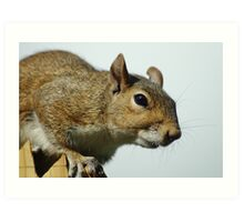Squirrely II Art Print