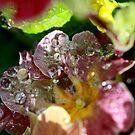 Water popcicles by Susan van Zyl