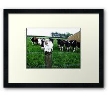 Cat & Cows Framed Print