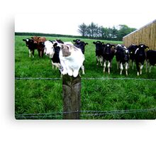 Cat & Cows Canvas Print