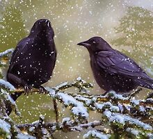 Winter Crows by kenmo