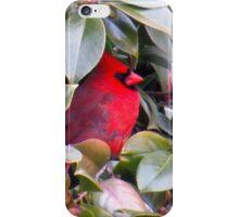 Camellia Bush Cardinal iPhone Case/Skin