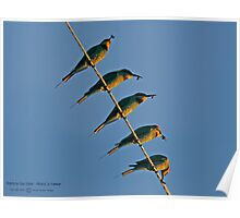 Bee Eater Bee Eating! Poster
