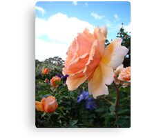Blousey Peach Canvas Print