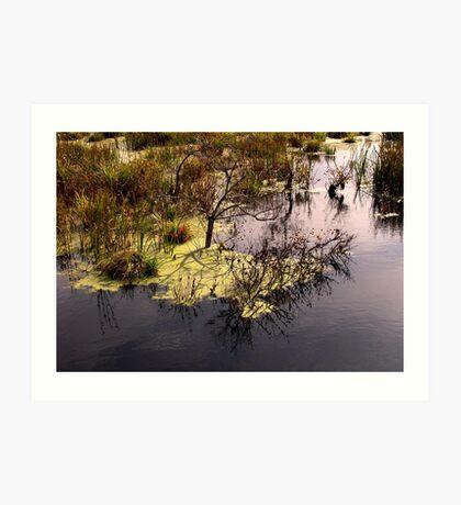Swamp . Art Print