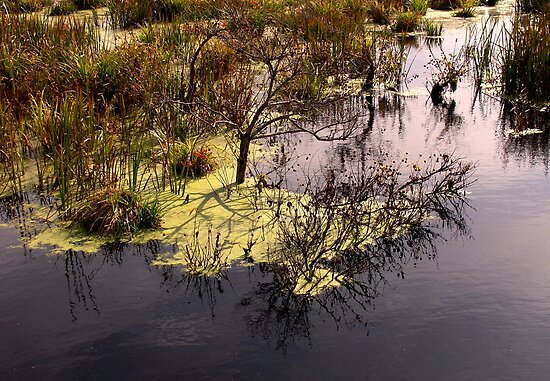 Swamp . by Saulite2