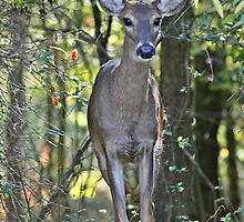 Beauty in the woods by Lori Walton