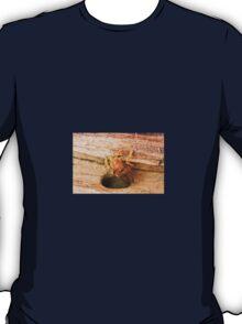 Golden Carpenter Bee T-Shirt