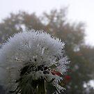 Dandy Droplets by lareejc