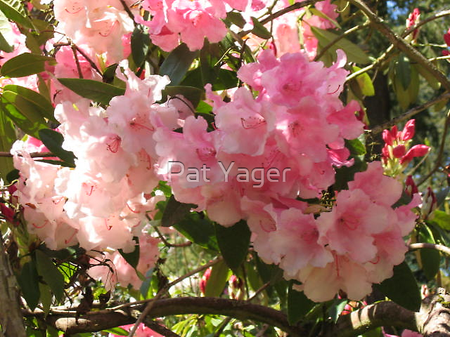 Cotton Candy by Pat Yager