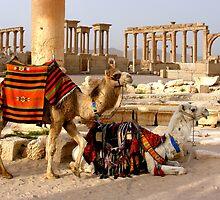 PALMYRA - SYRIA by Michael Sheridan