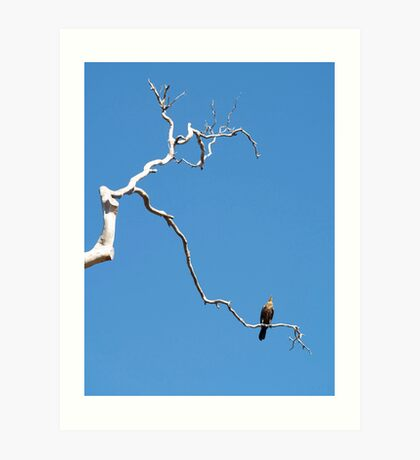 birds #91, away on high   Art Print