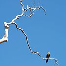 birds #91, away on high   by stickelsimages