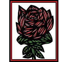 Litterateur Flowers Red Green White Photographic Print