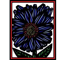 Novae Flowers Red Green Blue Photographic Print