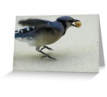 Gotta Eat and Fly Greeting Card