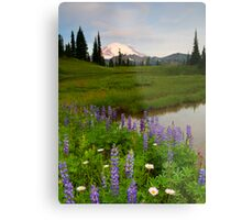 Lupine Sunrise Metal Print