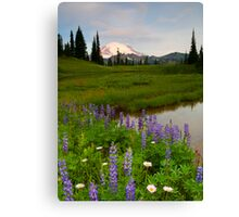 Lupine Sunrise Canvas Print