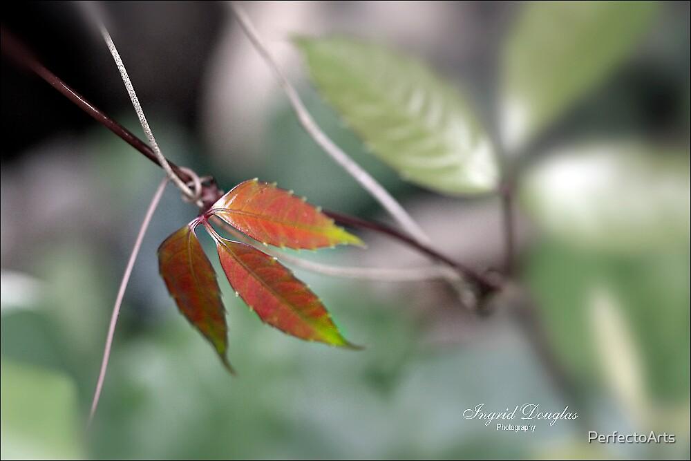Rhythm of the seasons by PerfectoArts