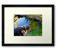 Buddy asks, Mirror, Mirror on the Creek, Who is the Fairest Dog of All? Framed Print