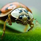 Ladybug by luc1ddr3am