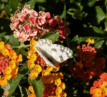 Butterfly amidst the flowers!! by Bonnie Pelton