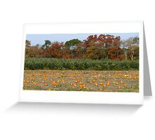 Autumn in Rhode Island   Pumpkins and Red Maples flank the Christmas Trees Greeting Card