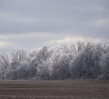 Ice storm part 2 by Severin