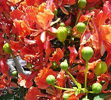 Flowering Tree by Kasia  Kotlarska