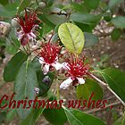 Christmas wishes . . . by Vic Cross