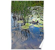 Waterfowl and Pond (after Monet) Poster