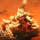 thorny devil (_Moloch horridus_) by tarnyacox