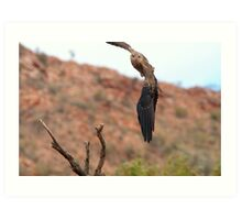 Whistling Kite Incoming Art Print