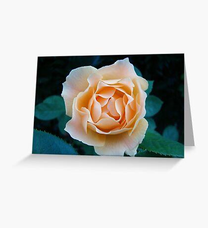 Peach Rose~ Greeting Card