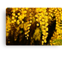 3D Wattle Canvas Print