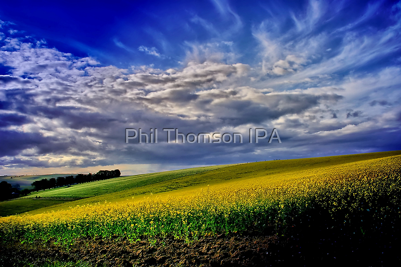 """""""Fruits of the Promise"""" by Phil Thomson IPA"""