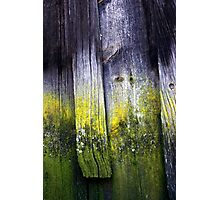 Wood from History Photographic Print