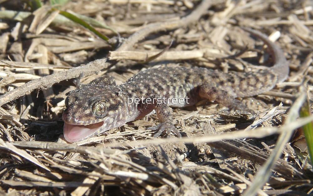 Bynoe's Gecko, Heteronotia binoei by peterstreet