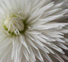 Whiteness by Jenni77