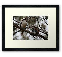 Kookaburras Hunting Framed Print