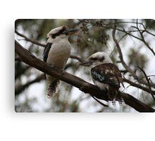 Kookaburras Hunting Canvas Print