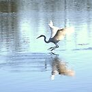 Landing or Taking OFF???? by Larry Llewellyn